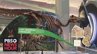 At Smithsonian's renovated Hall of Fossils, dinosaurs are just the beginning