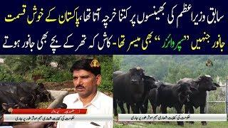 Luxury life style of former Prime Minister - Pm house Buffaloes Auction - Pti Imran Khan latest news