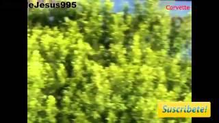 Accident de masini de lux sport auto  2013 HD