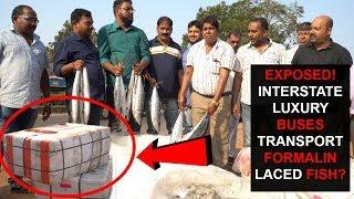 EXPOSED! FORMALIN LACED FISH TRANSPORTED BY LUXURY BUSES TO GOA?