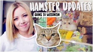 No More Hamster Room | Hamster Updates