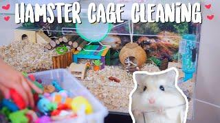 Hamster Cage Cleaning | Roborovski Hamster