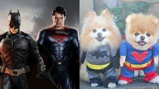 Superheroes as Dogs (Hulk, Iron Man, Spiderman, Captain America, Avengers)