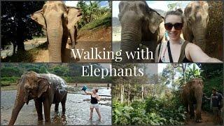 A Day at Elephant Nature Park Thailand | Travel Vlog | Lux Life