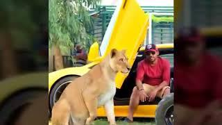DUBAI ARABS WITH THEIR PETS AND LUXURY CARS