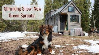 Life in a Tiny House called Fy Nyth - Shrinking Snow, New Green Sprouts!