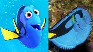 Finding Dory Characters in Real Life 2018