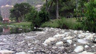 13 tonnes of fish found dead in luxury neighborhood in Rio lagoon