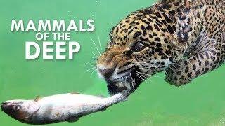 Amphibious Mammals: The Life Aquatic