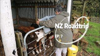 New Zealand Roadtrip EP. 7: Luxury Airbnb Farmstay