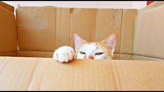 """BOX is LIFE"" Cat Enjoying Birdwatching inside his Luxury Box! ????????"
