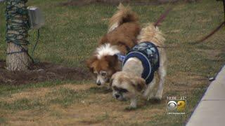 New Pet Policy At Luxury Apartment Building Asks For Dog DNA Samples