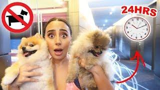 I SNUCK MY DOGS INTO A LUXURY HOTEL FOR 24 HOURS... (OVERNIGHT CHALLENGE)