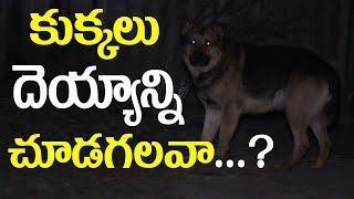 కుక్కలు దెయ్యాన్ని చూడగలవా..?? || Is Dog has Power to See Devils || SumanTV