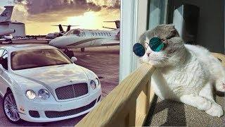 10 Luxury Cat Hotels That ACTUALLY Exist